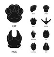 design feet and fauna logo set feet vector image