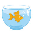 goldfish in aquarium isolated magic marine animals vector image vector image