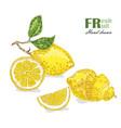 lemon isolated on white background fruit vector image vector image