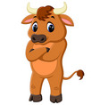 cute baby bull cartoon vector image