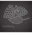 Chalkboard label with blackberries vector image