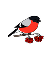 Colorful Bullfinch Isolated on White Background vector image vector image