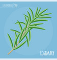 rosemary flat design icon vector image vector image