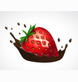 strawberry and chocolate splash vector image