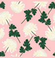white chrysanthemum flower on pink background vector image vector image