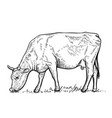 hand drawn cow on white backgrounddesign elements vector image vector image
