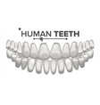 tooth mouth anatomy human teeth healthy vector image vector image