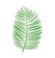 green palm leaf vector image