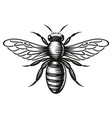 a black and white honey bee