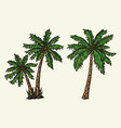 tropical palm trees colorful concept vector image