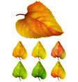 Collection of colorful autumn leaves - yellow vector image