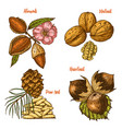 herbs condiments and spices almond and walnut vector image