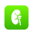 kidney icon digital green vector image