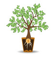 money tree growing from a coin root green cash vector image vector image