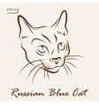 Russian Blue Cat vector image