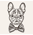 Sketch French Bulldog with bow tie Hand drawn dog vector image vector image