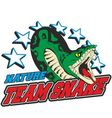 team snake vector image