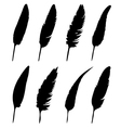 group feather vector image vector image