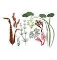 leaves set various algae vector image vector image