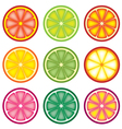 Colorful citrus slices vector | Price: 1 Credit (USD $1)