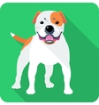 dog American Bulldog icon flat design vector image vector image