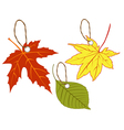 Labels of autumn leaves vector | Price: 1 Credit (USD $1)