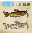 sketch of bullhead or sculpin fish vector image vector image