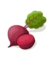 Beet isolated on white vector image