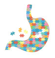 human stomach with colored puzzles isolated on a vector image vector image