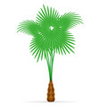 palm tree tropical stock vector image vector image