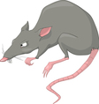 Rat cartoon vector image