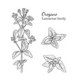 ink oregano sativa hand drawn sketch vector image vector image