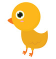 little cute chicken on white background vector image vector image
