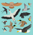 bird cartoon flying birdie owl dove and vector image vector image