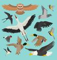 bird cartoon flying birdie owl dove and vector image