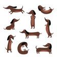 cute dachshund dog isolated set - cartoon pet vector image vector image