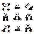 cute panda set vector image vector image