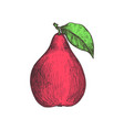 ripe pear hand drawn isolated icon vector image