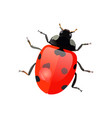 set hand drawn ladybugs ladybirds vector image vector image