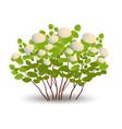 shrubs eps3 vector image