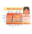 skin structure diagram vector image
