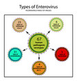 types of enterovirus coxsackie virus a b polio vector image
