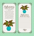 vintage label with aglaonema plant vector image