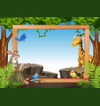 wild animal on nature frame vector image vector image