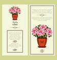 azalea flower in pot banners vector image vector image