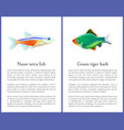 green tiger barb and neon tetra fishes posters vector image vector image