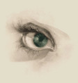 realistic woman eye drawn by hand vector image