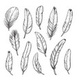 birds feathers hand drawn isolated vector image