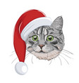 cat with christmas hat isolated on white vector image