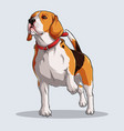 cute beagle dog with colorful shadows vector image vector image